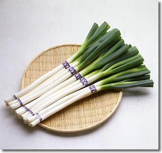 米子の特産:白ねぎ